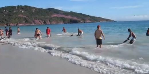 brazilienii salveaza delfinii